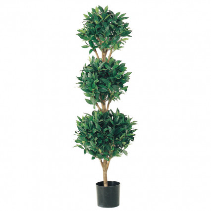4ft. Triple Ball Sweet Bay Topiary