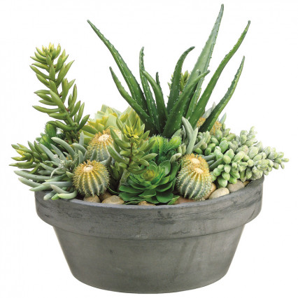 Succulents in Cement Pot