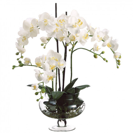 Phalaenopsis Orchid in Glass Jar