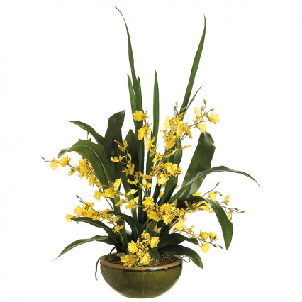 Oncidium Orchid in Bowl