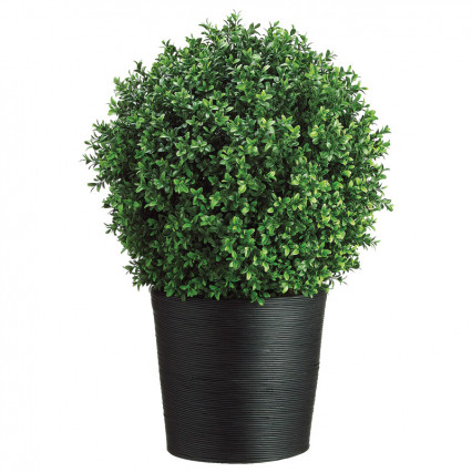 Boxwood Topiary in Bamboo Container