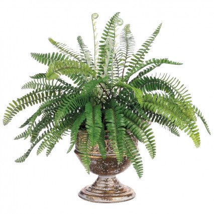 Woodland Fern in Tin Urn