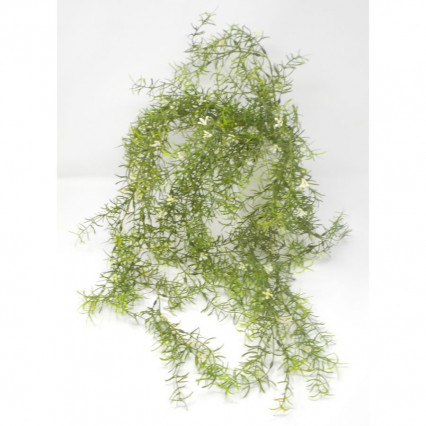 "30"" Sprengeri Hanging Bush-Green"