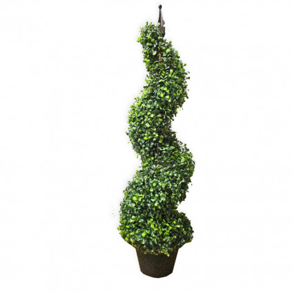 Boxwood Spiral Topiary Tree 3 ft.