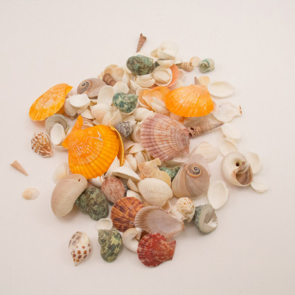 Assorted Seashells – Small Mesh Bag