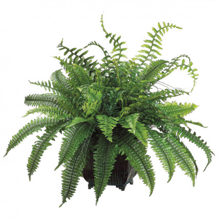 Fern in Metal Planter