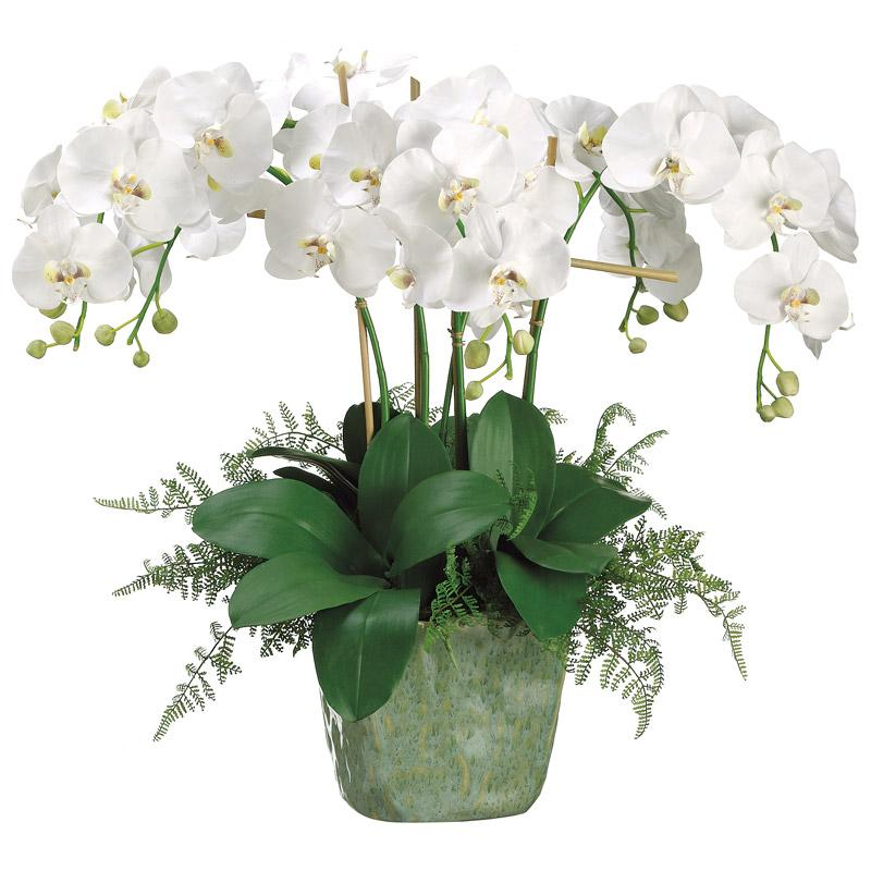 Phalaenopsis Orchid & Lace Fern in Ceramic Pot