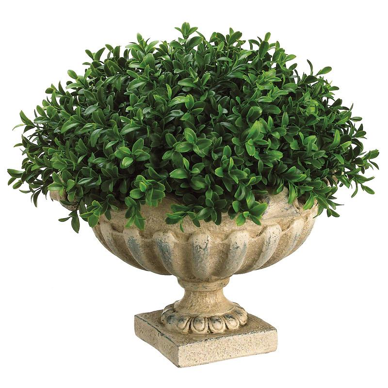 Boxwood Dome in Resin Urn