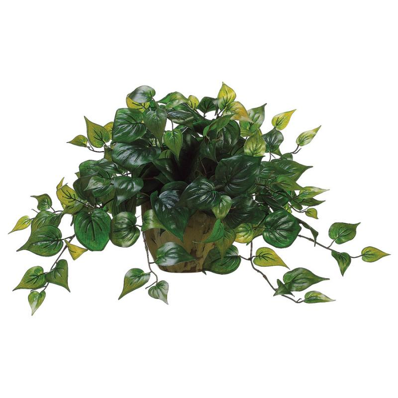 Philodendron in Ceramic Pot